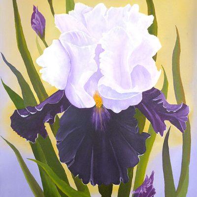 Iris, 2014, 60x80cm