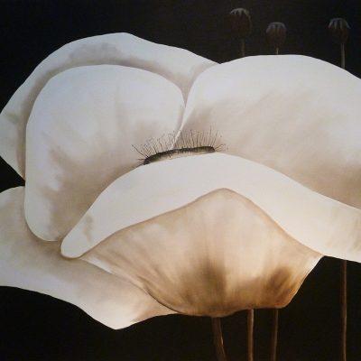 Zwei Mohnblüten weiss, 2017, 80x80cm